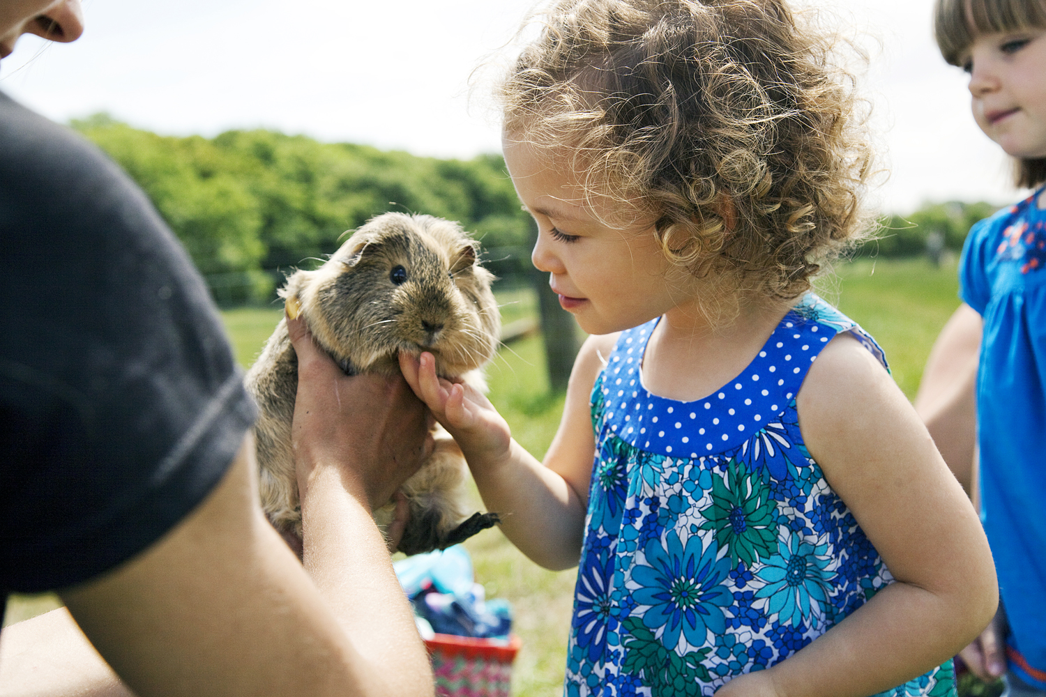 Bluebells Animal Patch - Petting the Guinea Pigs