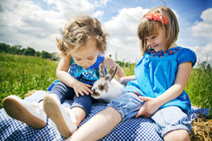 Bluebells Animal Patch - Petting the Rabbits