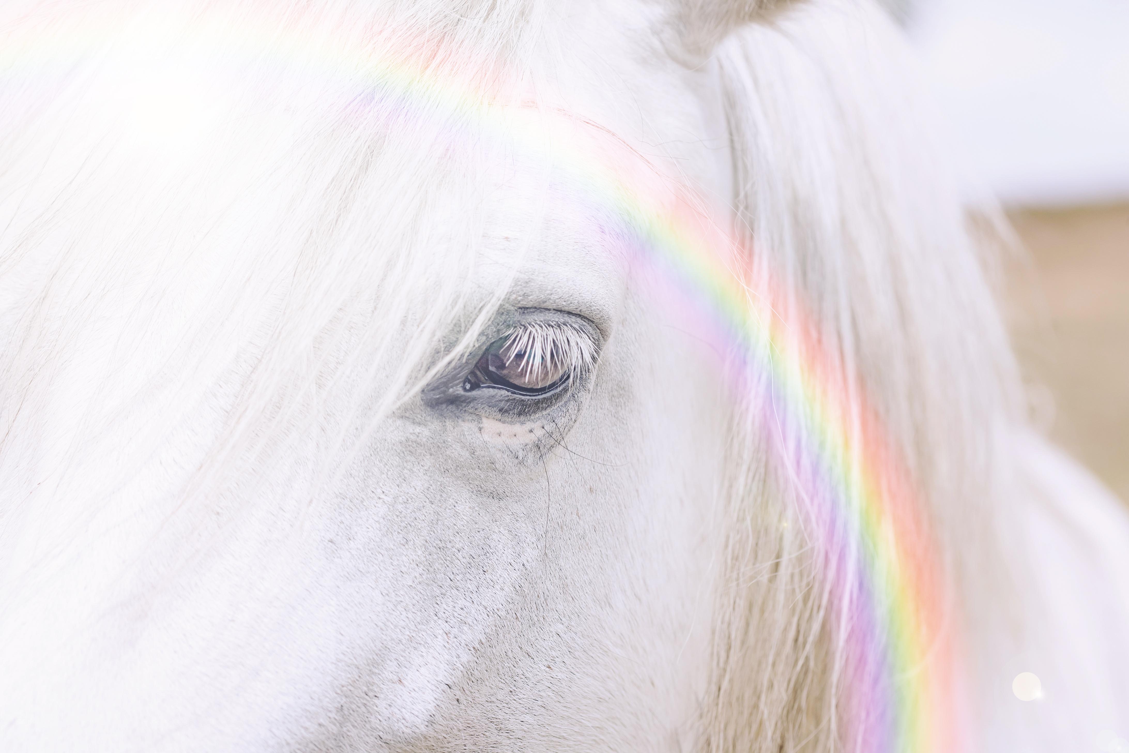 Magical Unicorn Week