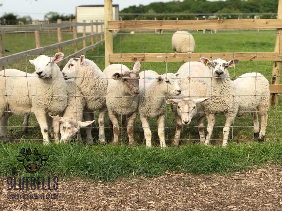 Wool Week Celebration