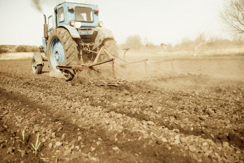 The Vintage Harvest