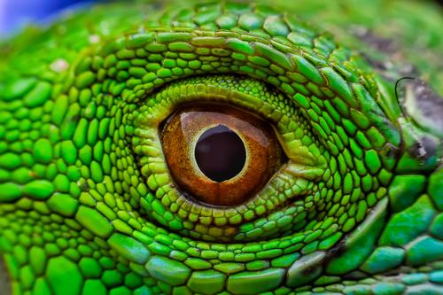 Reptile Roadshow