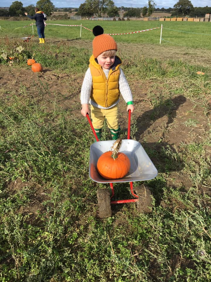 Early Bird Pumpkin Picking